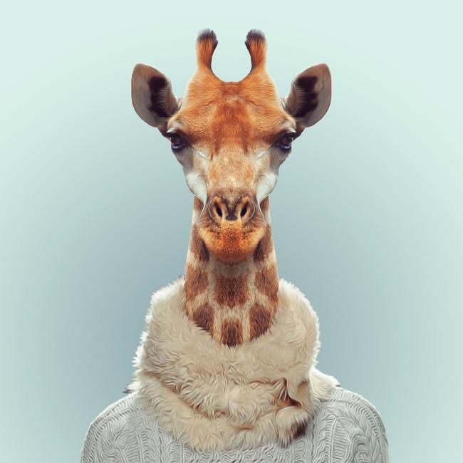 giraffe-yago-partal-zoo-portraits.jpg
