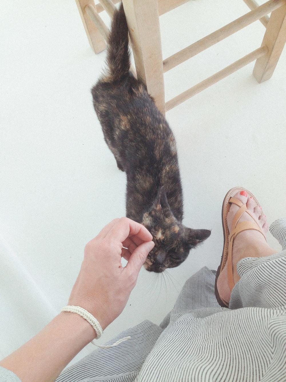 san-giorgio-cat.jpg