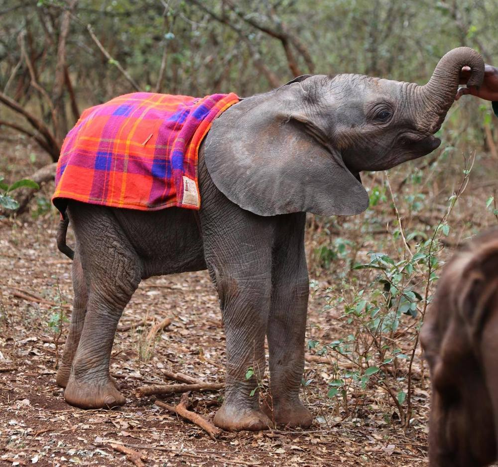 Tiny Tamiyoi loves nothing more than sucking on the thumbs of her keepers. Photo via DSWT.