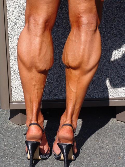 calves 1.jpg