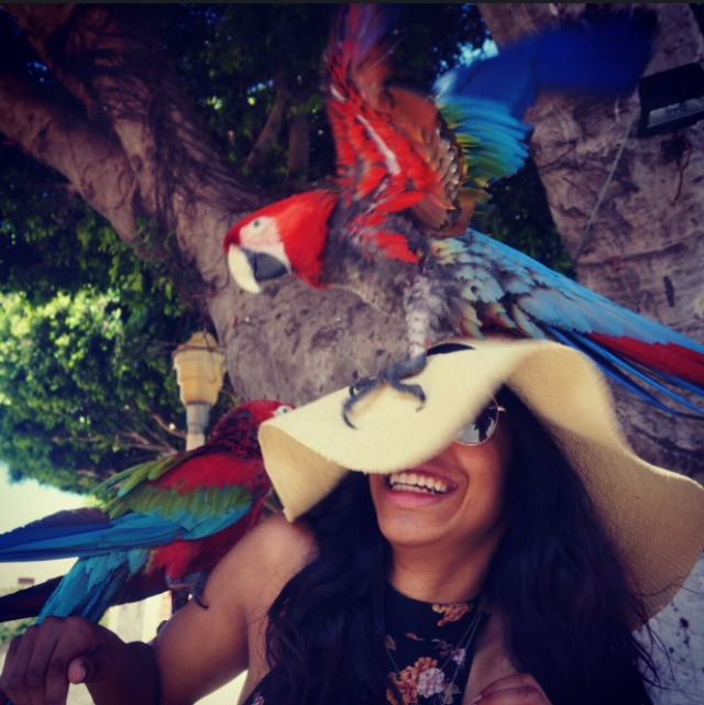Getting attacked by Rhodes parrots! #momentofmylife