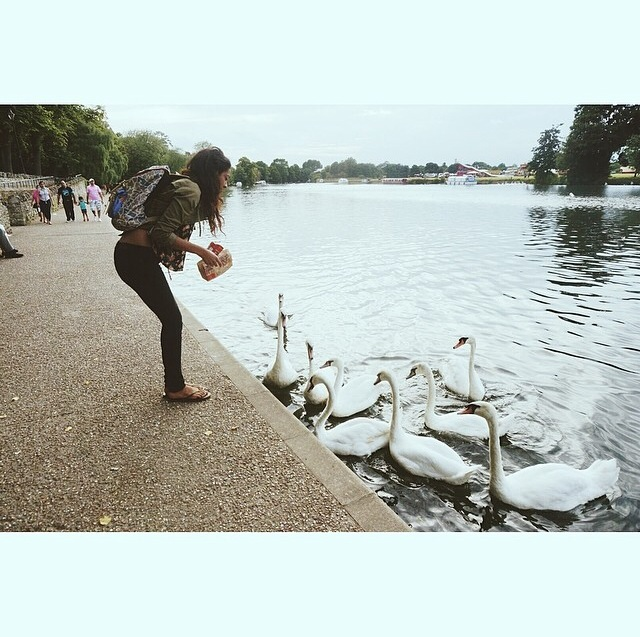 When I went to Windsor castles I fed royal swans Mcdonalds! Yay!