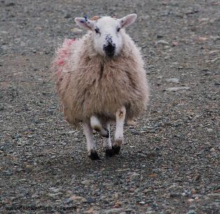 Outer Hebrides, Scotland, 2008