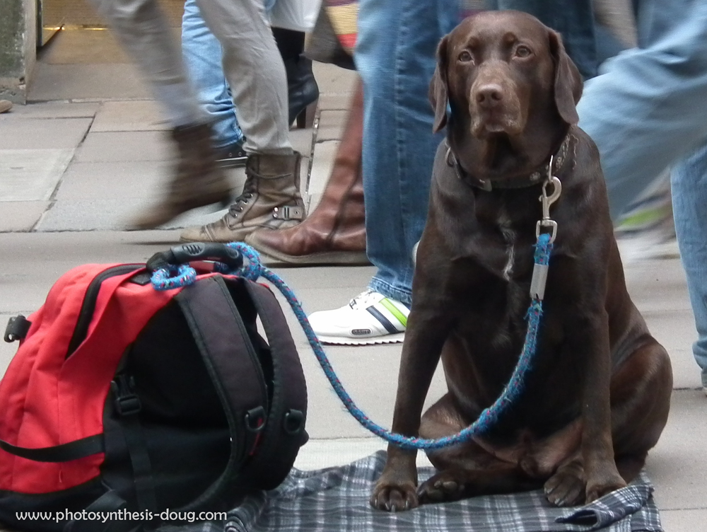 Bath Dog 2011-.jpg