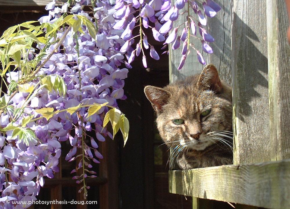 5b cat Alice-0183.jpg