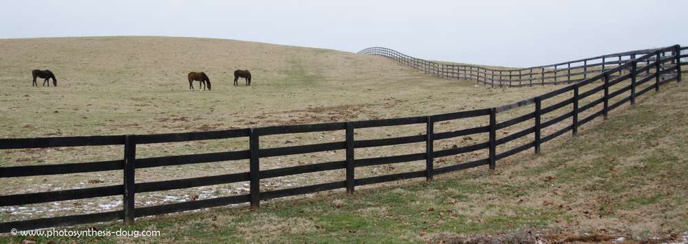 3 horses and a fence-0899.jpg