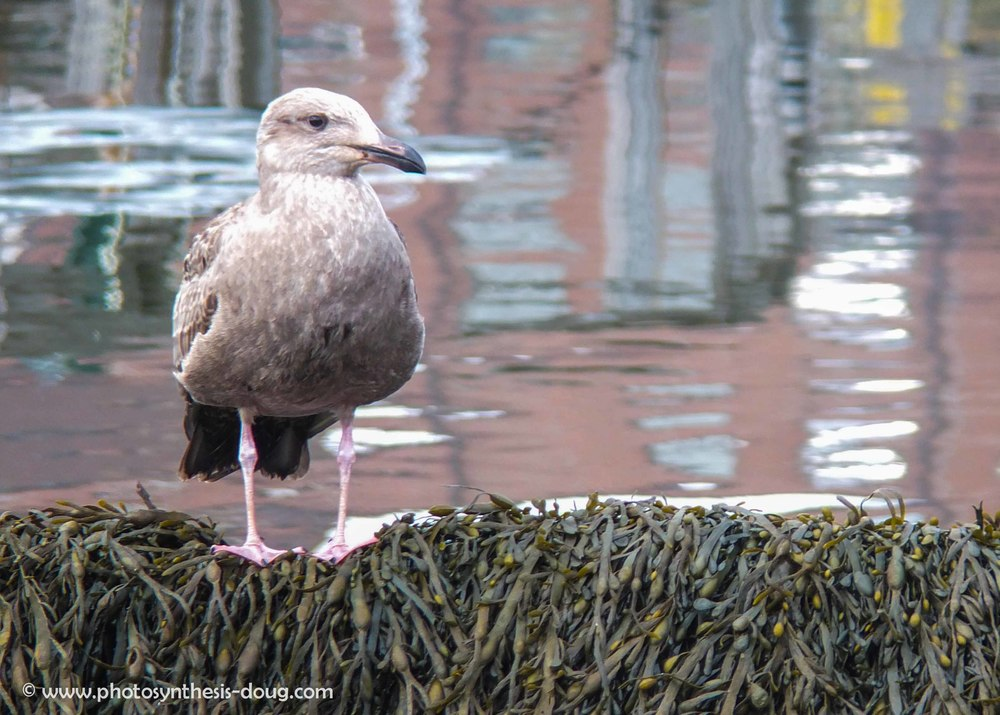 w-gull with background-0492.jpg