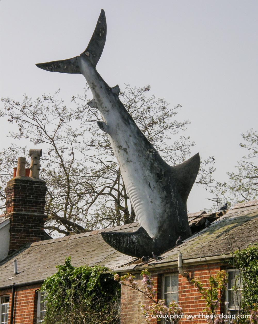 hr-roof fish-4280331.jpg