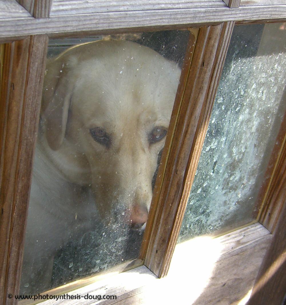 kadie through dirty window-0088.jpg