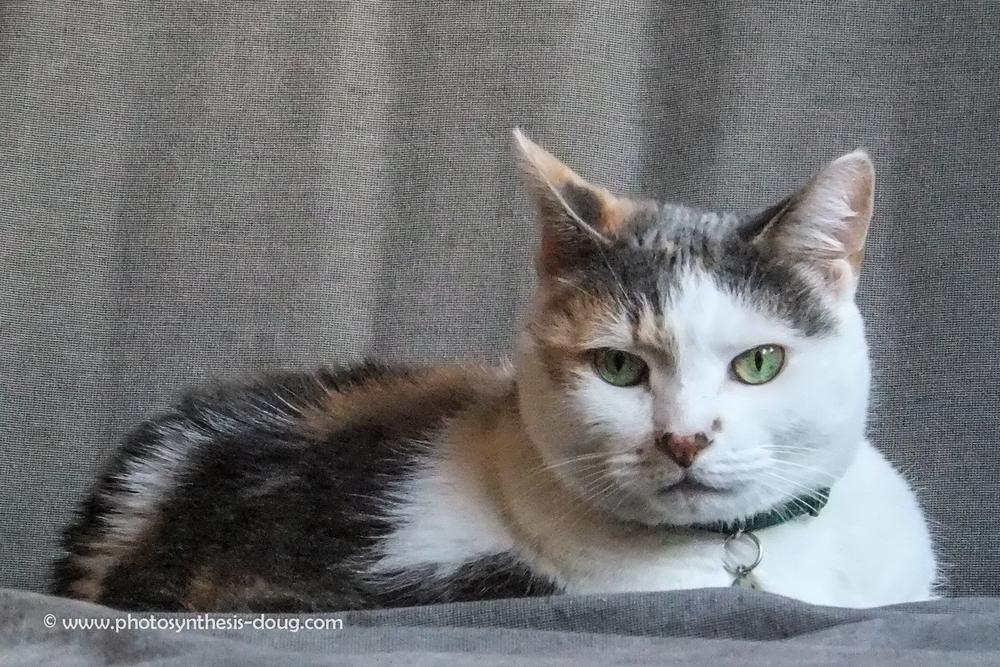 Claire's cat-1365.jpg