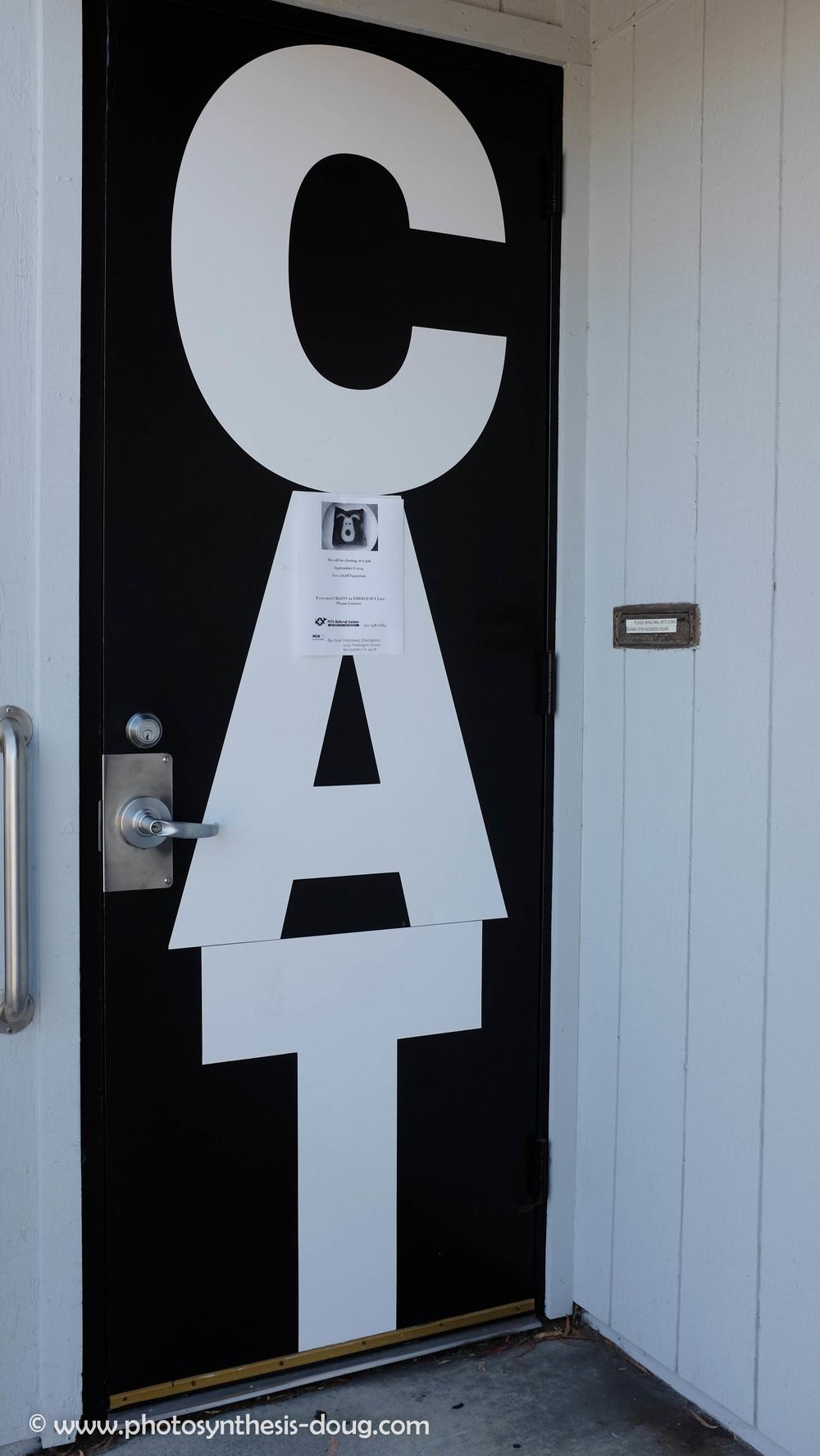 cat door-5187.JPG