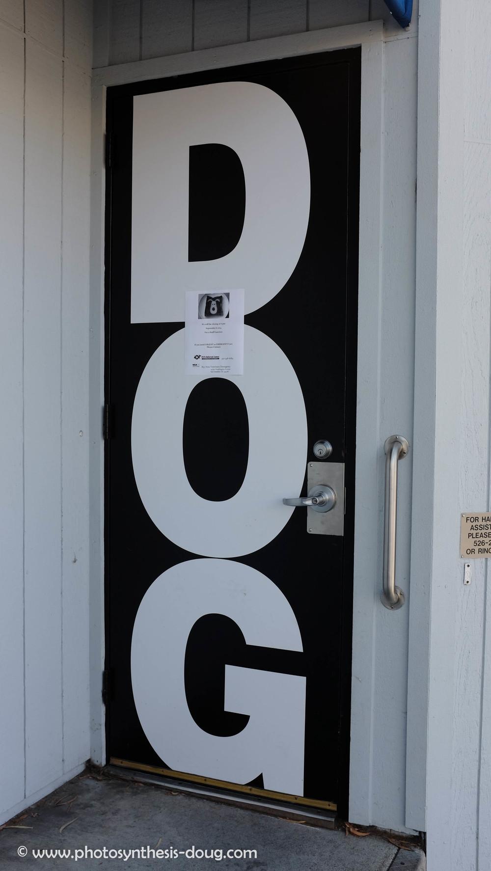 dog door-5188.JPG