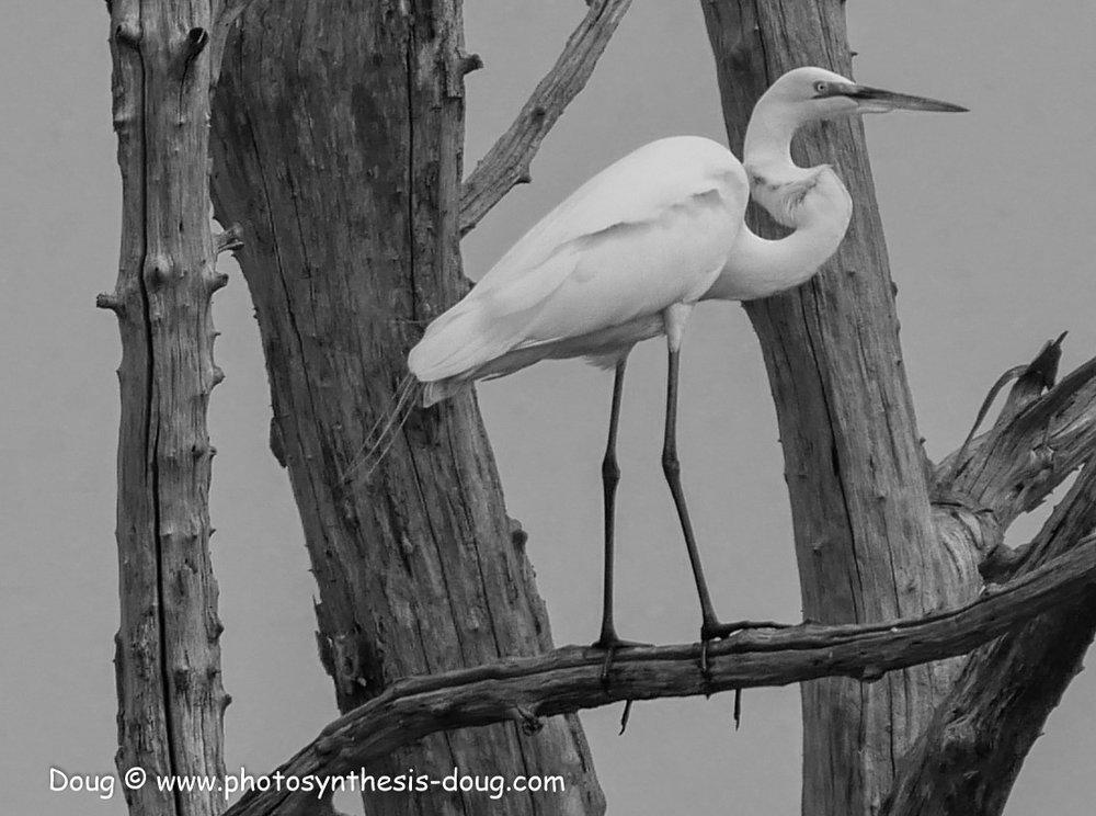 Bombay Hook birds-.JPG
