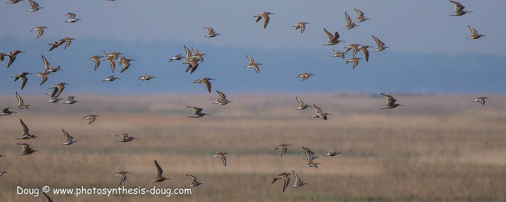 Bombay Hook birds-1040918.JPG