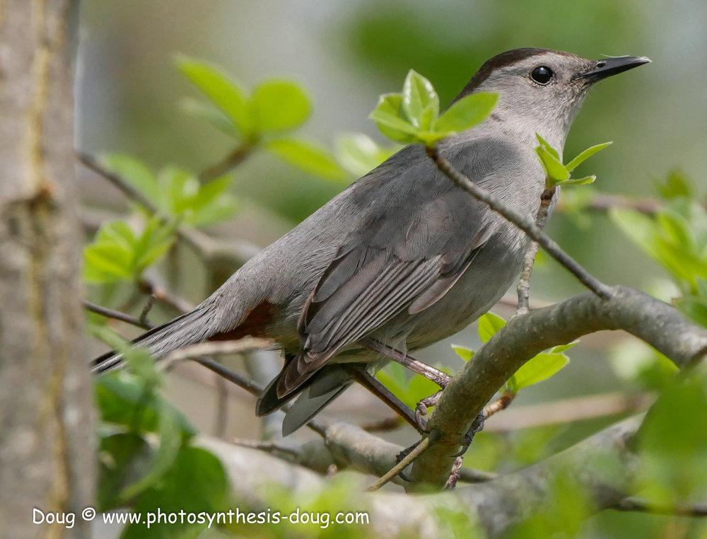 Bombay Hook birds-1040937.JPG