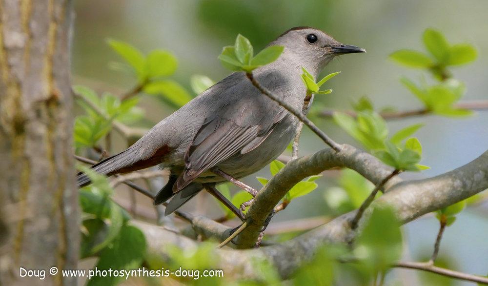 Bombay Hook birds-1040934.JPG