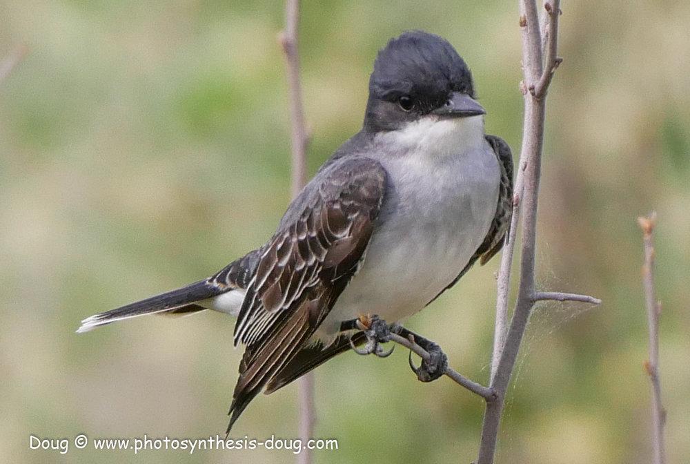 Bombay Hook birds-1040966.JPG