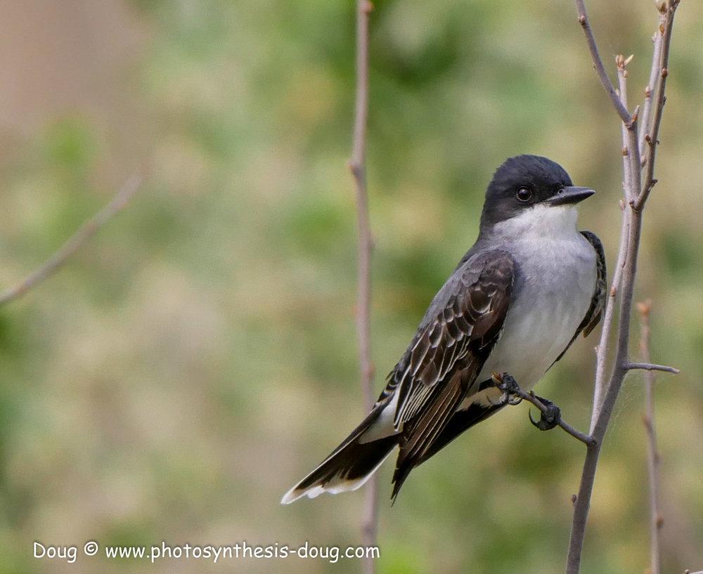 Bombay Hook birds-1040971.JPG