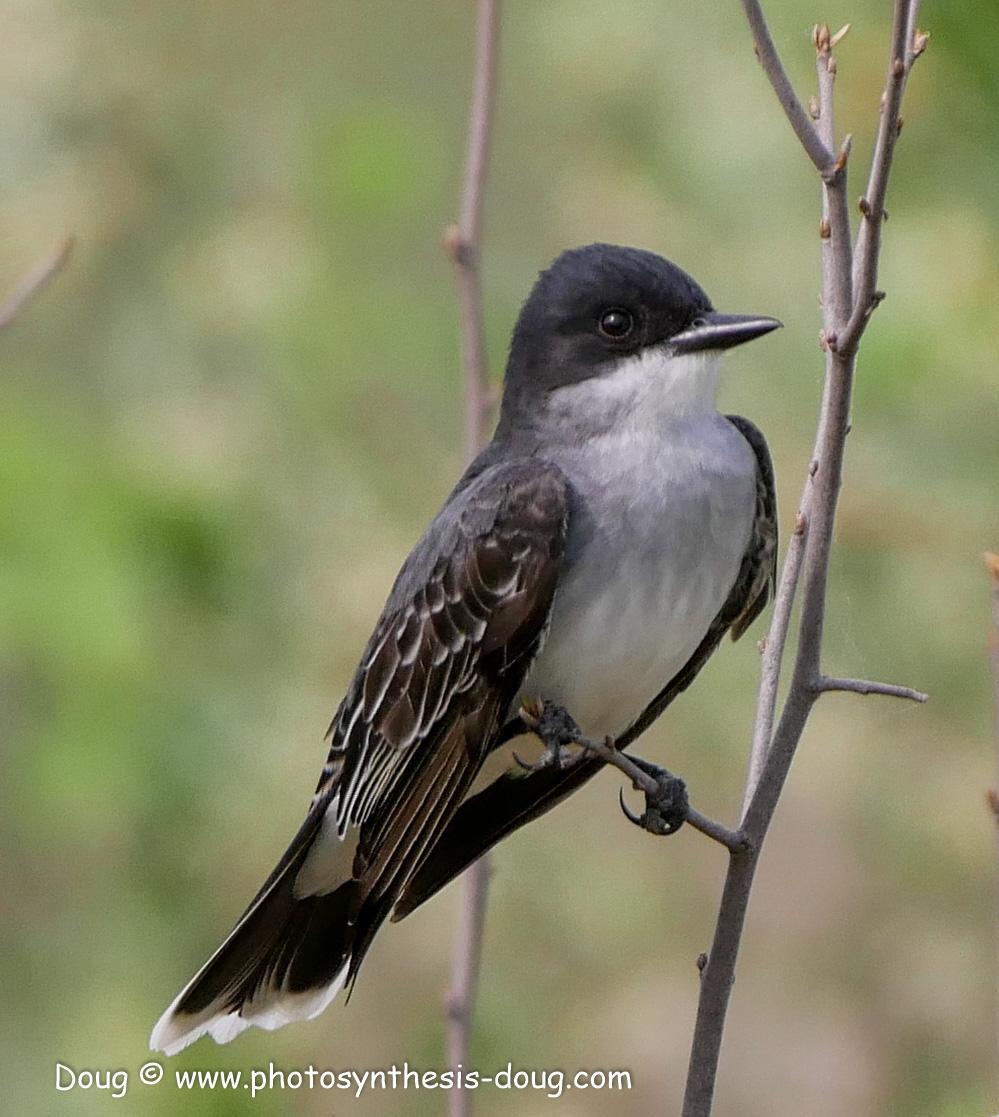 Bombay Hook birds-1040983.JPG