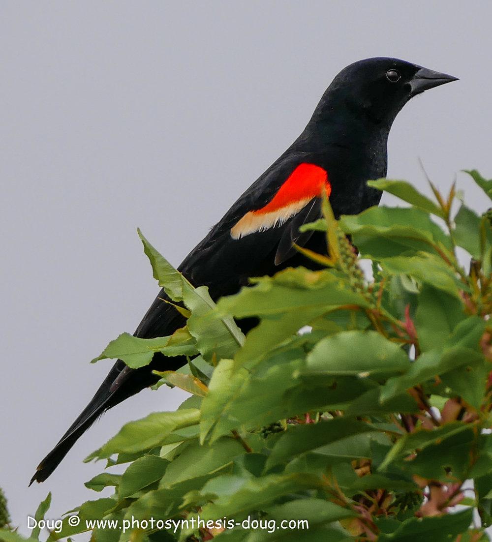 Bombay Hook birds-1050040.JPG