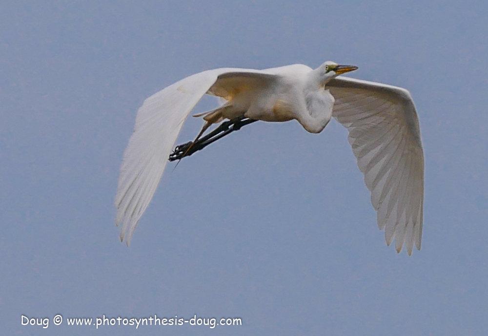 Bombay Hook birds-1050048.JPG