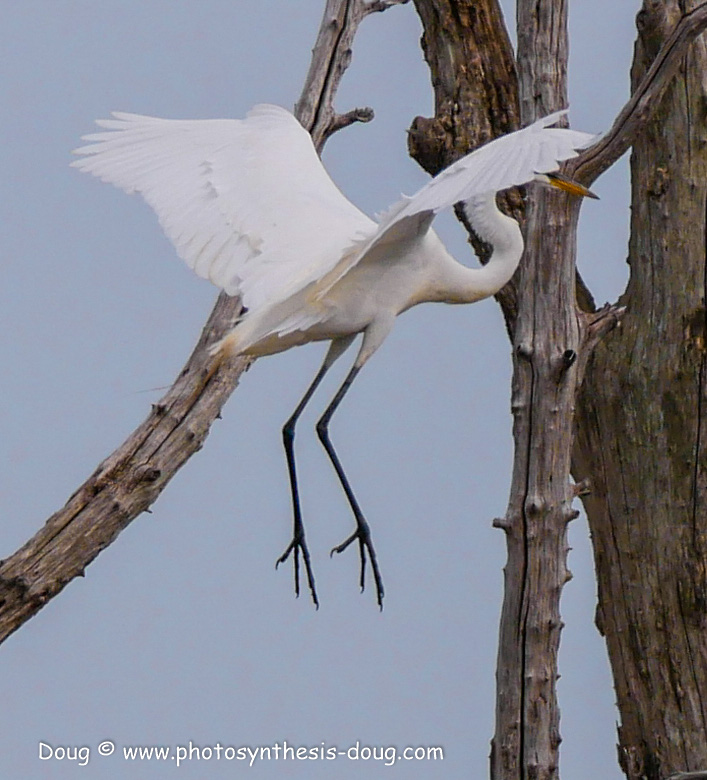 Bombay Hook birds-1050052.JPG