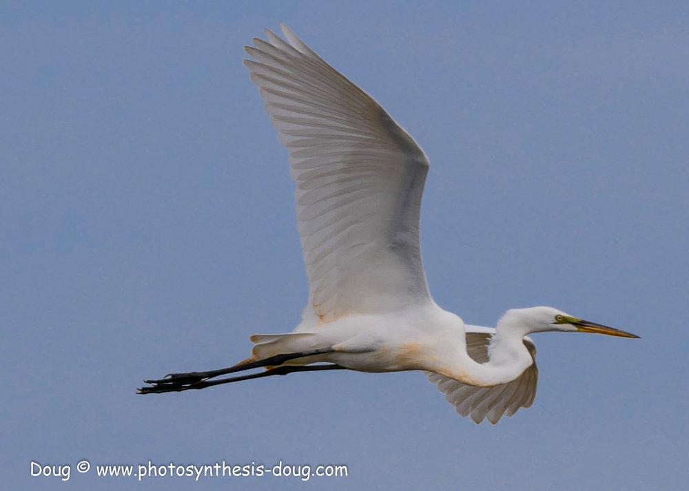 Bombay Hook birds-1050050.JPG