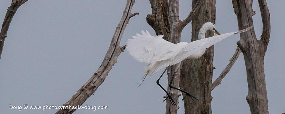 Bombay Hook birds-1050053.JPG