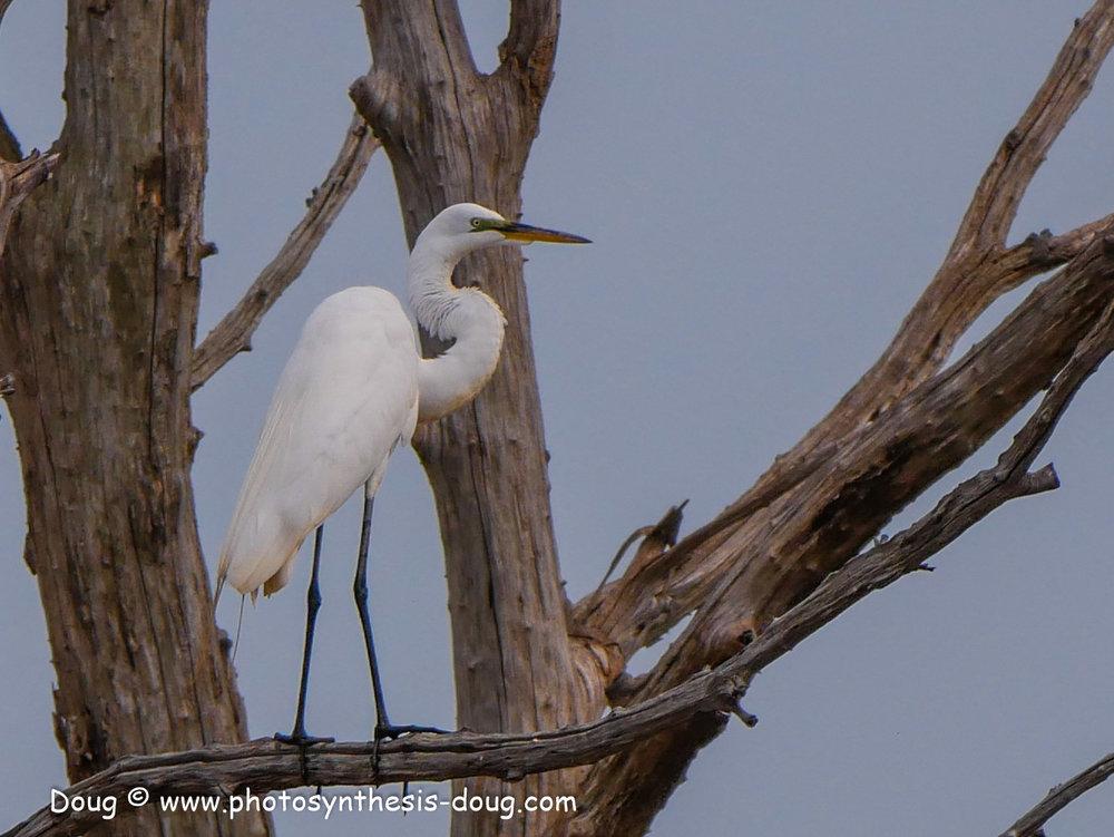 Bombay Hook birds-1050056.JPG