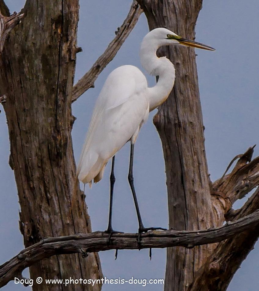 Bombay Hook birds-1050060.JPG