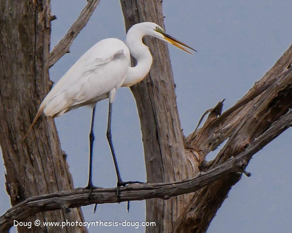 Bombay Hook birds-1050068.JPG