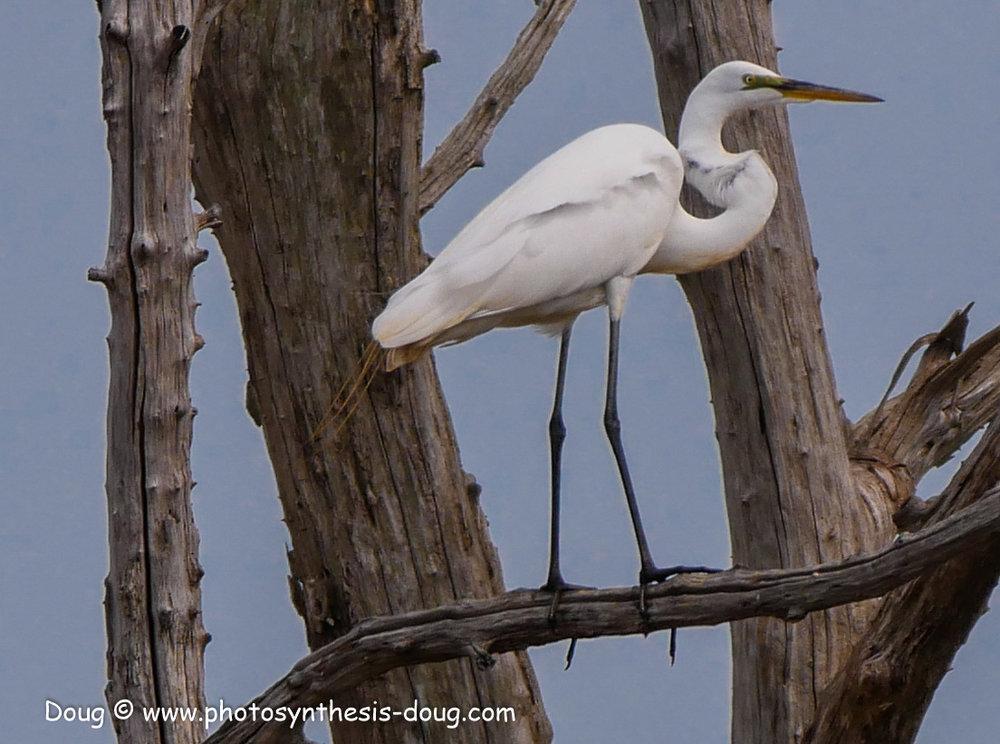 Bombay Hook birds-1050071.JPG