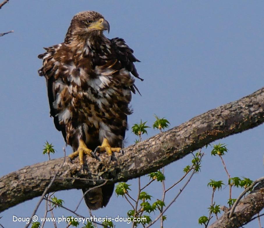 Bombay Hook birds-1050133.JPG