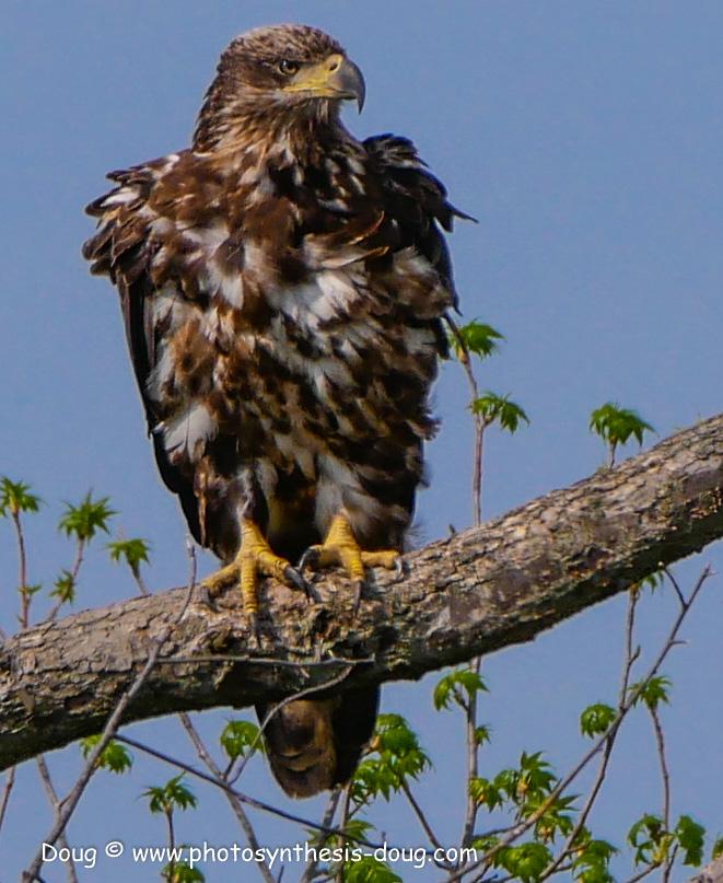 Bombay Hook birds-1050136.JPG