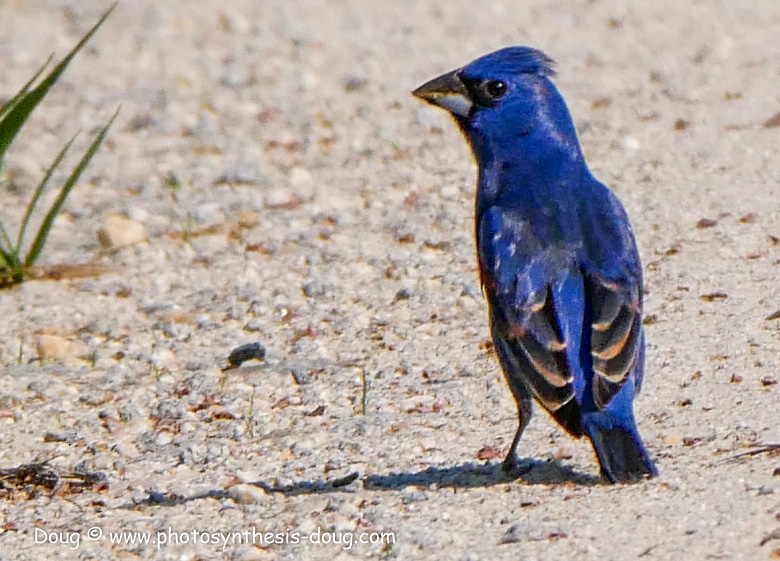 Bombay Hook birds-1050210.JPG