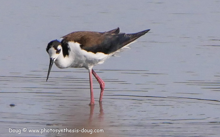 Bombay Hook birds-1050213.JPG