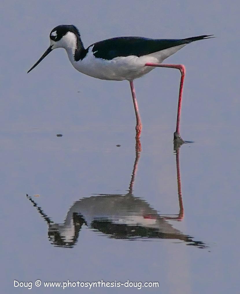 Bombay Hook birds-1050256.JPG