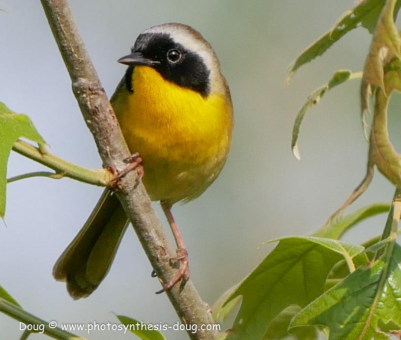 5 bird-1050721.JPG