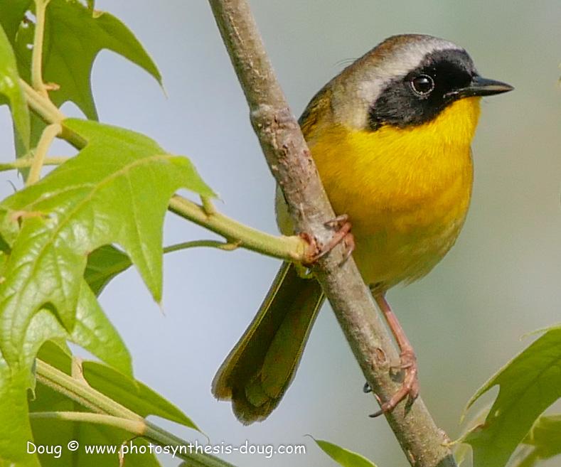 5 bird-1050723.JPG