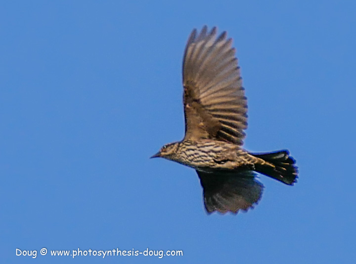 bird-1050570.JPG