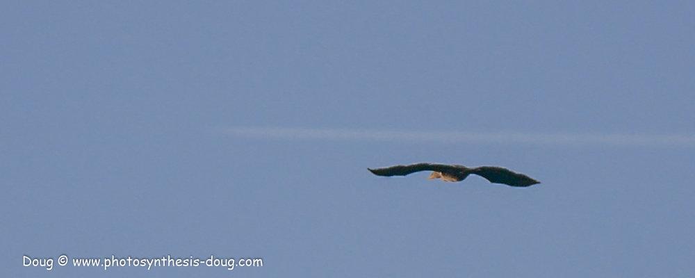 bird-1050581.JPG