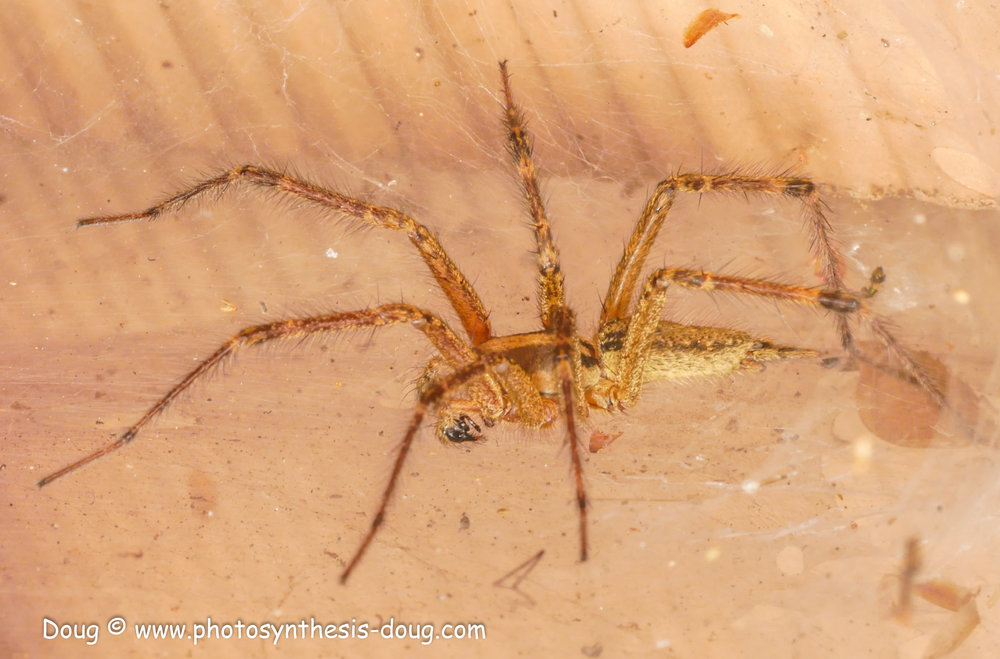 spider 9-19-1080411.JPG