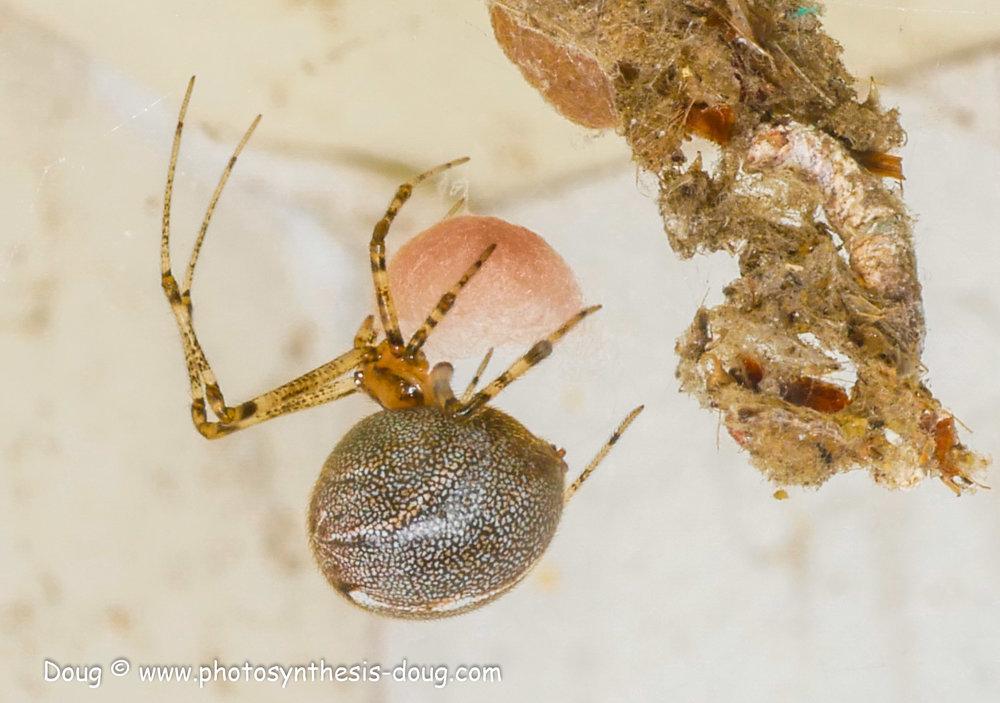 spider 9-19-1080418.JPG