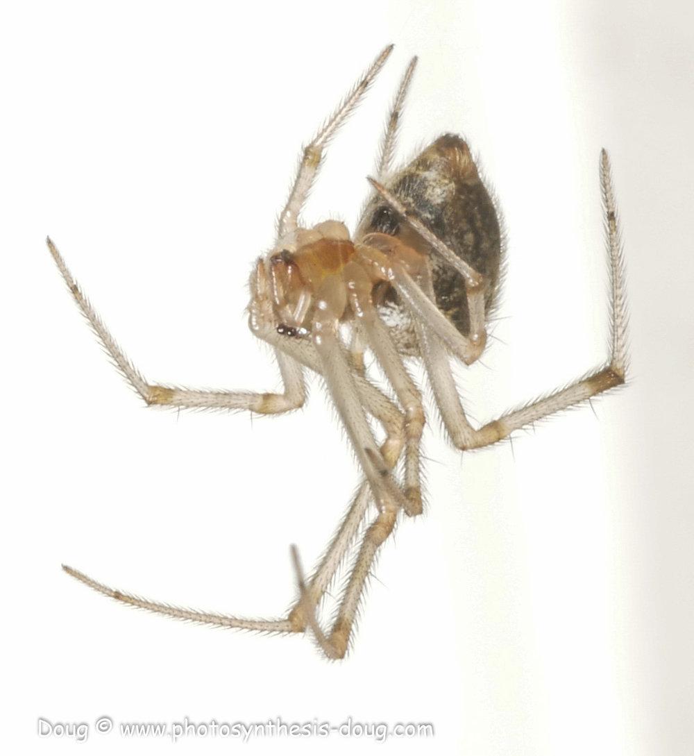 spider 9-19-1080420.JPG