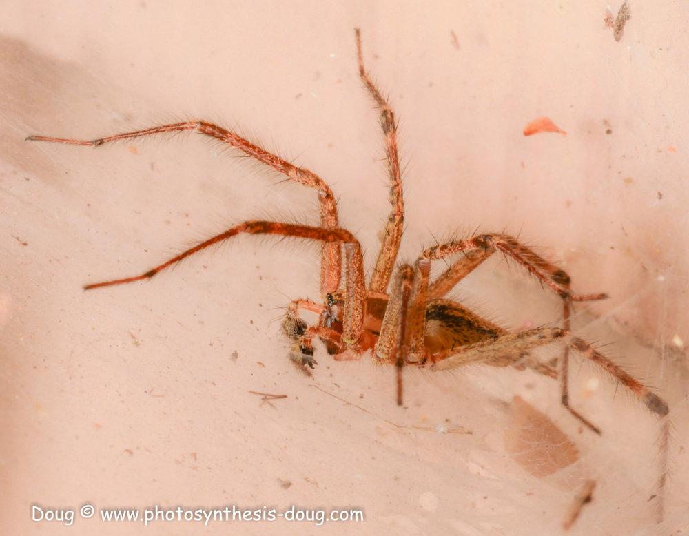 spider 9-20-1080457.JPG
