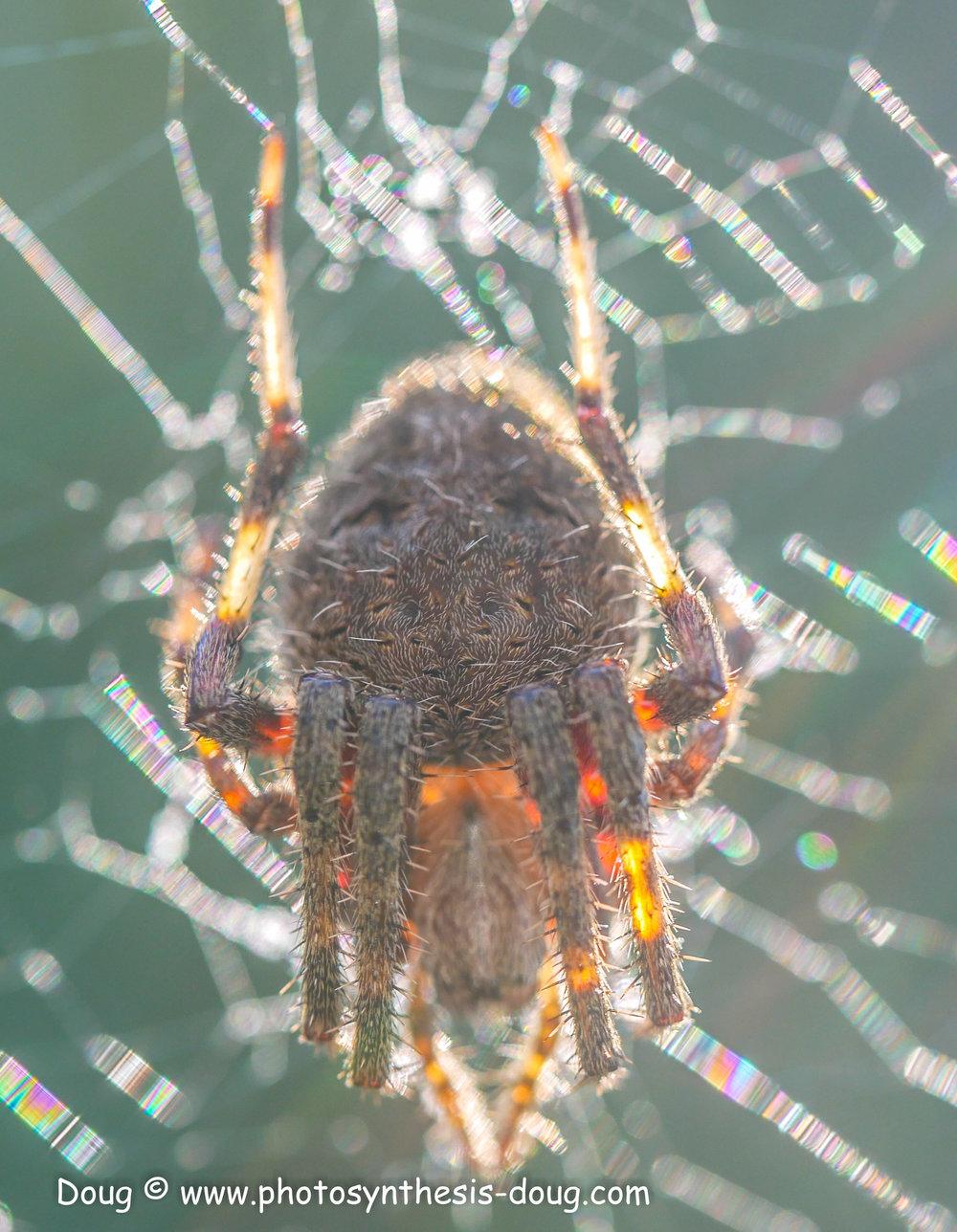 spider 9-20-1080428.JPG