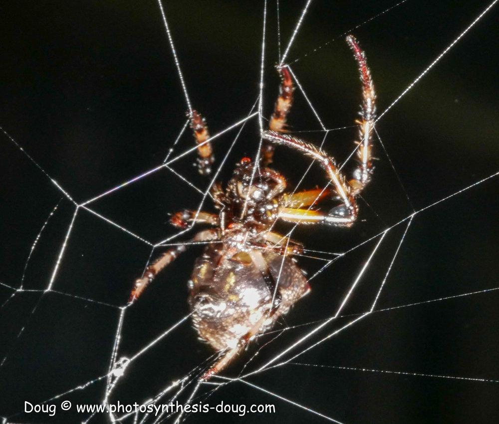 spider-1070654.JPG