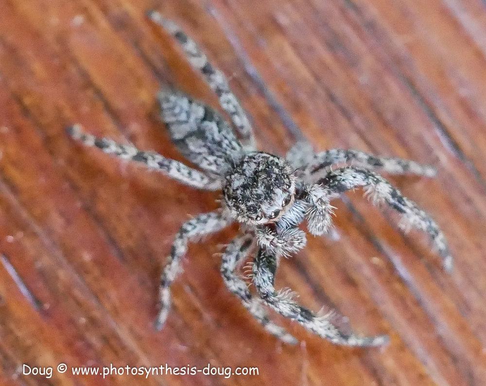 spider-1080171.JPG