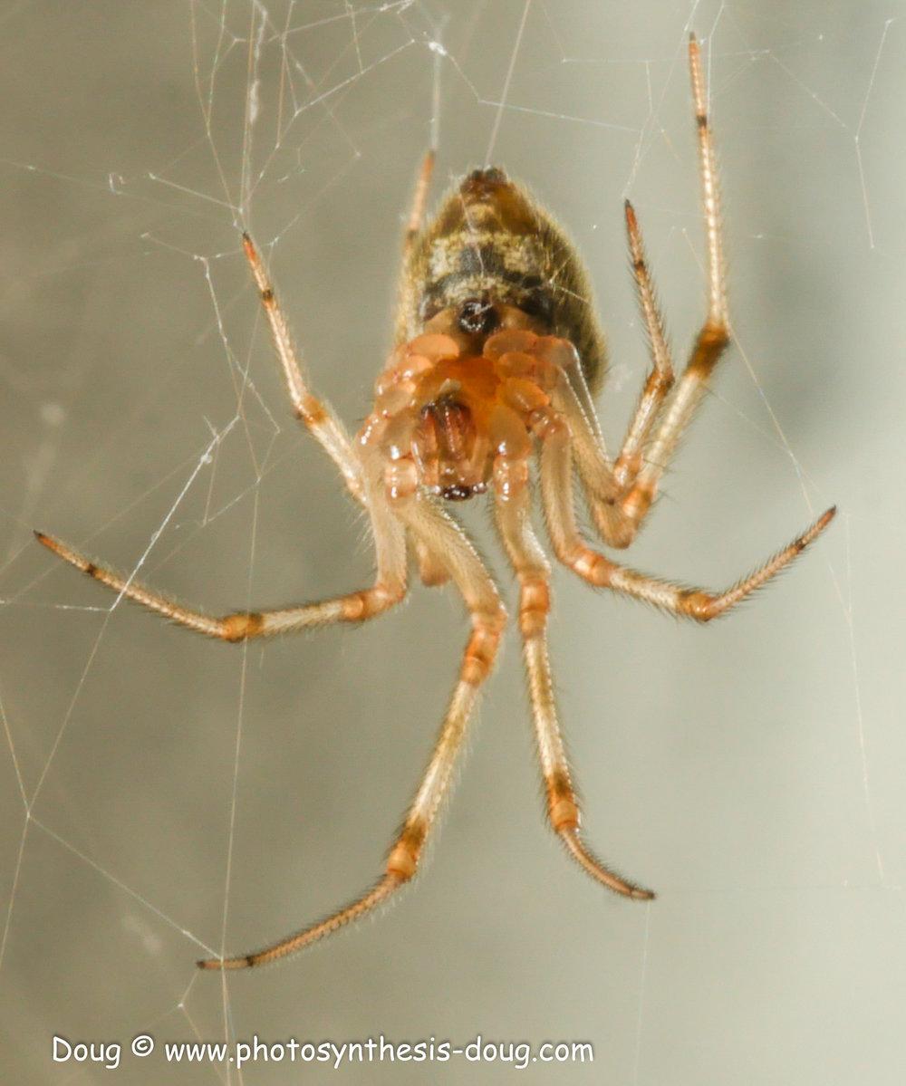 spider 9-20-1080460.JPG