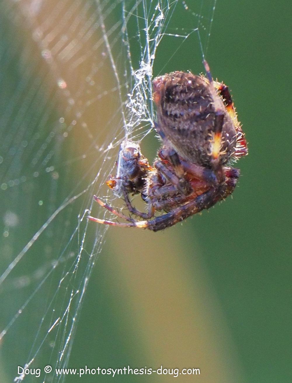 spider-041119.JPG